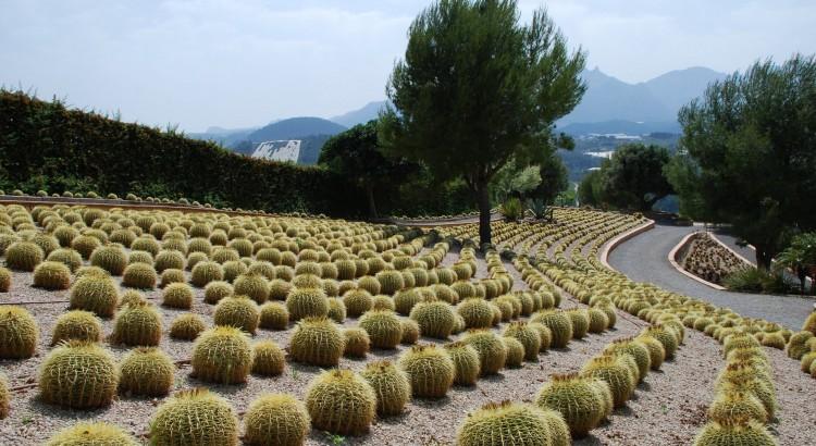 Cactus Algar