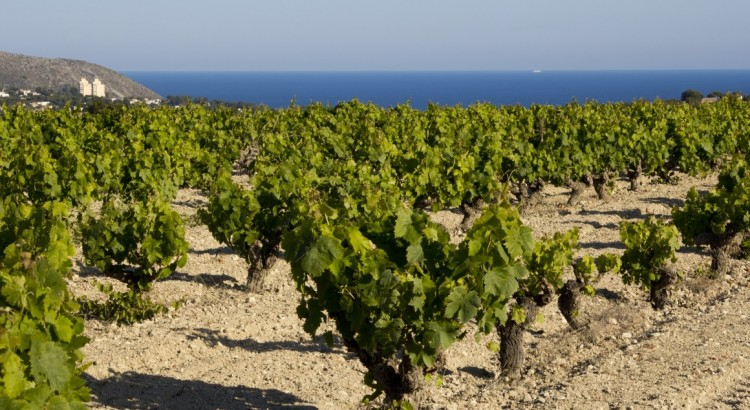 Mistela Cims del Mediterrani
